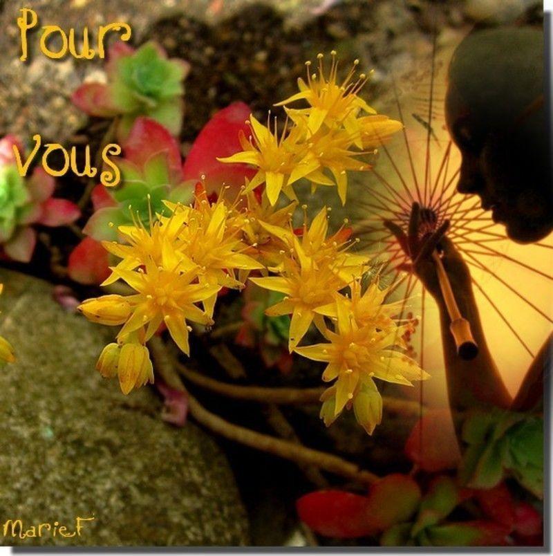 Jolies fleurs de mon jardin for Artichaut plante grasse