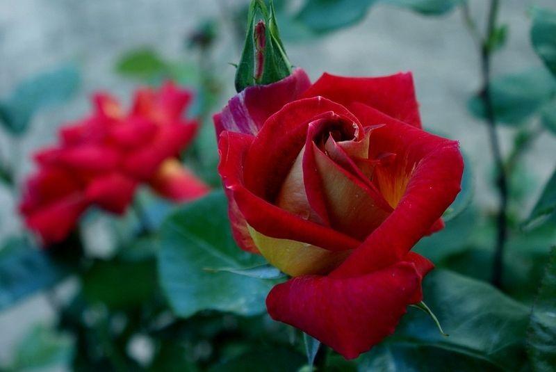 Stunning Les Fleurs De Ton Jardin Photos - Design Trends 2017 ...